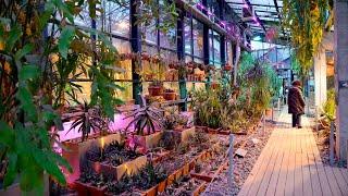 Тропический лес в Москве: в «Аптекарском огороде» открыли уникальную выставку