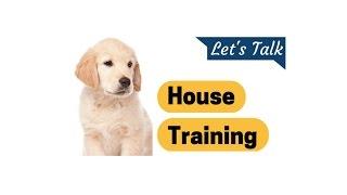 Golden Retriever Puppy Potty Training Let's Talk House Training Golden Retriever Potty Training Tips