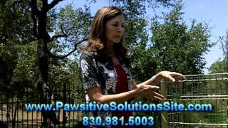 San Antonio Dog Training - Dog Potty Training Tips