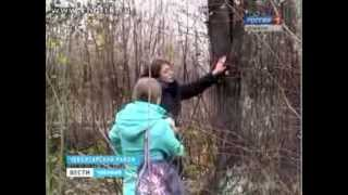 Чувашский дуб-великан стал победителем Всероссийского фестиваля «Диво России»
