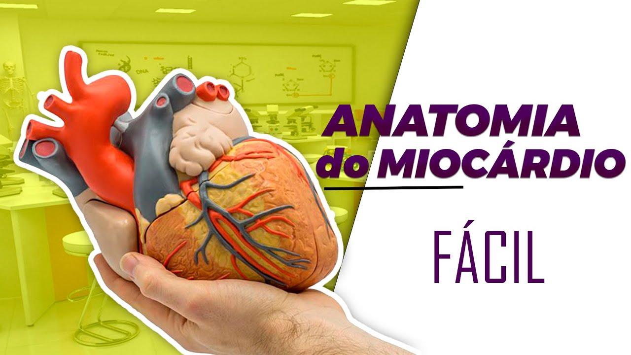 Anatomia do Coração descomplicada