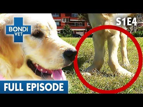 BONDI VET - Season 1 Episode 04
