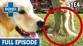 oldest-goat-in-australia-s01e04-bondi-vet