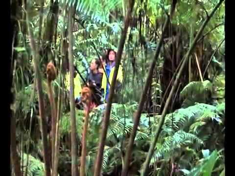 Looking for the manumea: an ecological survey in community conservation areas, Savaii Island, Samoa