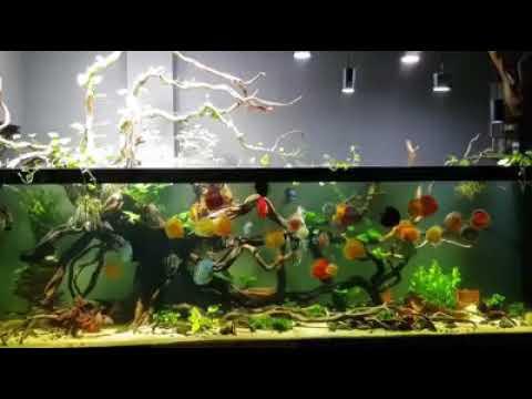 Aquarium Aquascape Sederhana - Aquascape Ideas