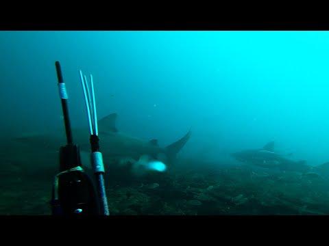 i-hate-sharks-!!!-diver-scared-off-by-bull-sharks---jupiter-florida-dec-2019