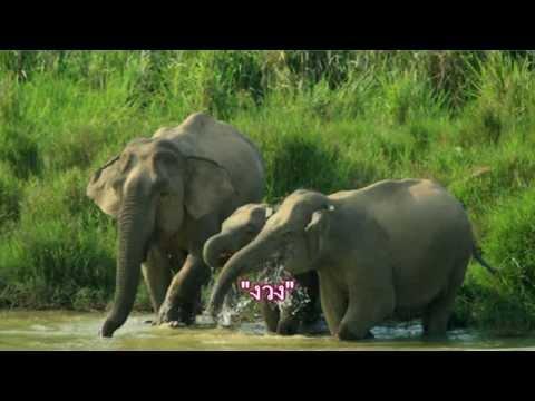 คำลักษณะนามของงวงช้าง