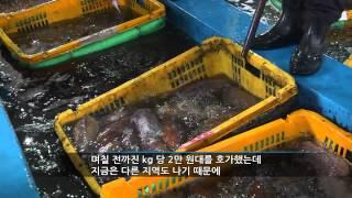 수산현장5min 신안군수협 송도위판장