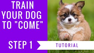 How To Train Your Dog To Come: Step 1 Tutorial