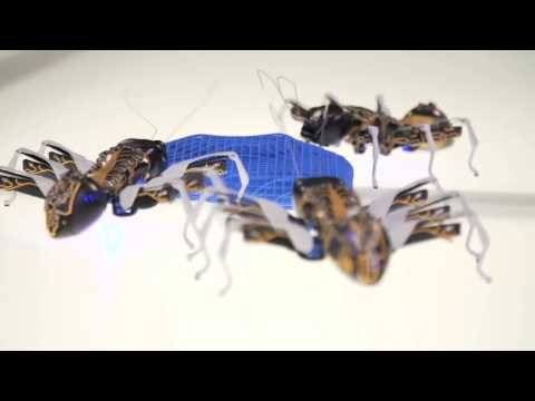 Bionic Ants 2017 Technology