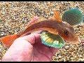 Black Tide: Chesil Beach Fishing - A Mixed Bag (July 17)