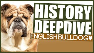 ENGLISH BULLDOG HISTORY DEEPDIVE