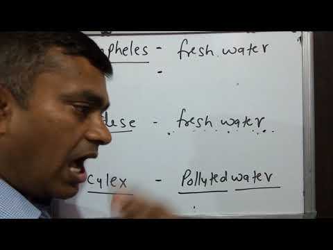 Human Disease Part 3 Vector Born Disease,mosquito ,anopheles ,added,culex