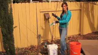 Planting a Dwarf Fruit Tree and Advantages for the Backyard Garden
