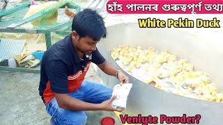 ফাৰ্মত হাঁহ-কুকুৰাৰ পোৱালি অনিলে প্রথমতে আমি কি কি কৰিব লাগিব ? Duck farm in Assam.