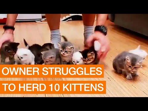 Owner Struggles to Herd 10 Kittens