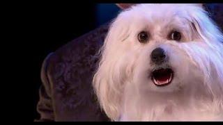 Шок:Говорящая собака на британском Шоу талантов