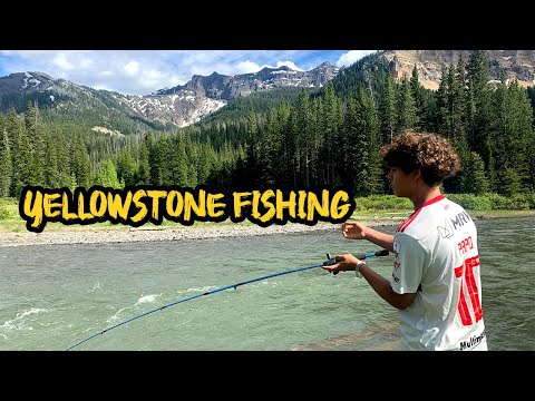 Yellowstone Fishing Huge trout!!!
