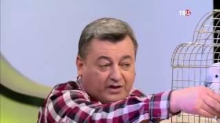 Говорящий попугай Савелий и его дрессировщик Виктор Зуйков в студии Настроения на ТВЦ