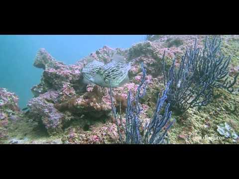 La plongée à Oman (reportage)
