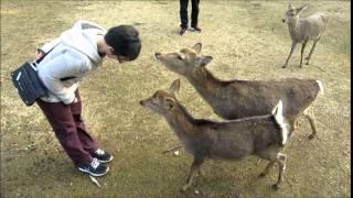 naras bowing deer