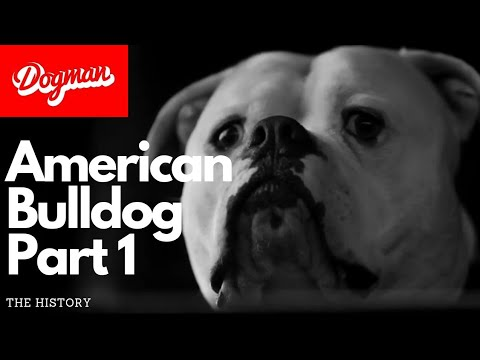 American Bulldog part 1 | The History
