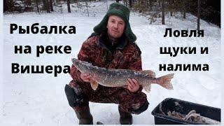Рыбалка на жерлицы на реке Вишера Ловля щуки и налима 2020