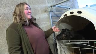 Elevage : et si vous baptisiez un veau normand ?