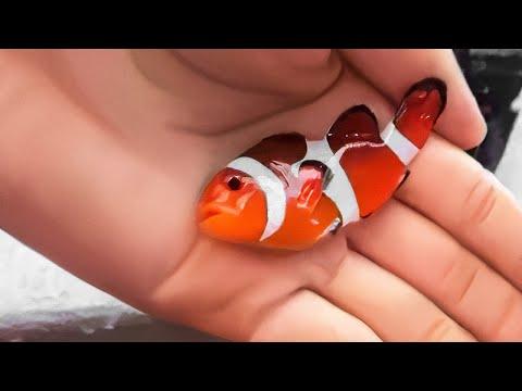 10 kleinste Tiere, die nicht so niedlich sind, wie sie scheinen