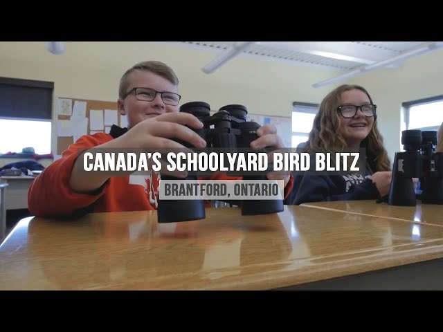 Schoolyard Bird Blitz program - Bird Studies Canada