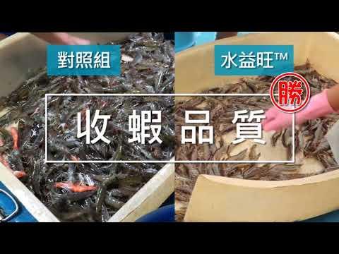 水益旺-飼料用益生菌-白蝦田間試驗
