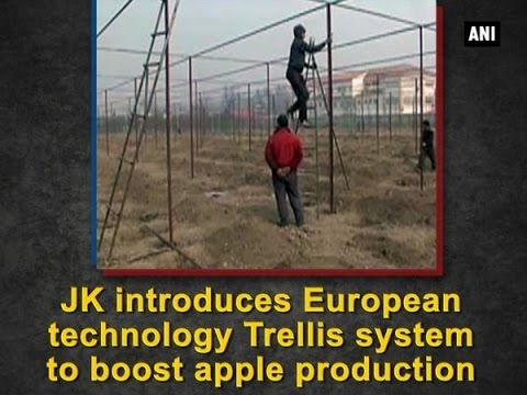 J and K introduces European technology Trellis system to boost apple production - ANI #News