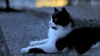 ムビコレのチャンネル登録はこちら▷▷http://goo.gl/ruQ5N7 猫のおかげで...