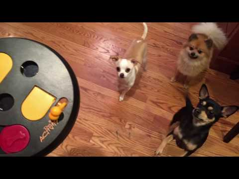 TRIXIE FLIP BOARD FOR DOGS