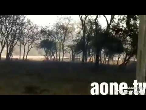Bandipur forest in fire | animals were Running toward Towns