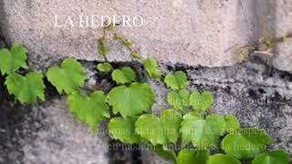 02 | Deklamado de Hejna – La Hedero | 담쟁이 – 에스페란토