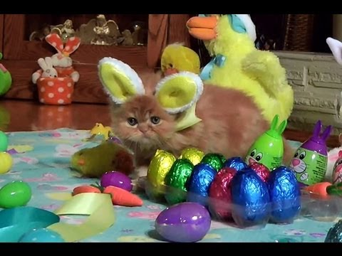 Osterhasen-Kätzchen
