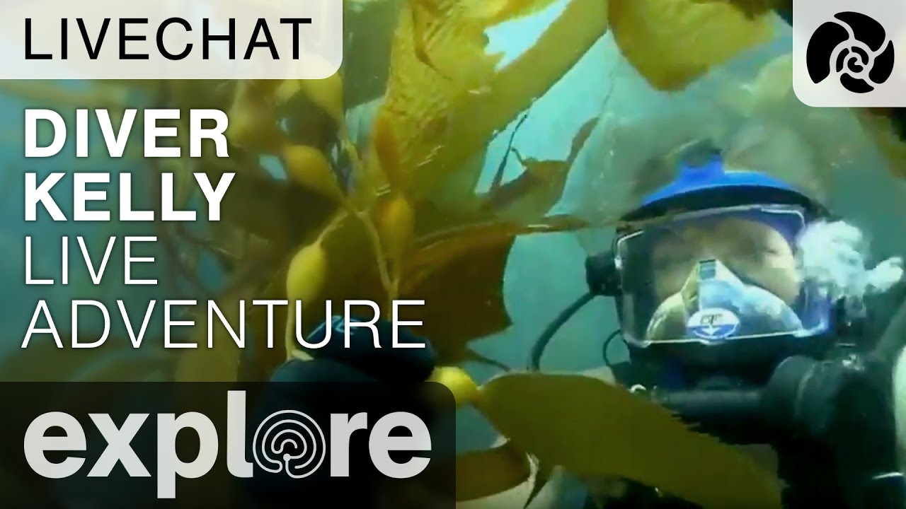 Channel Islands Live Adventures with Diver Kelly - Underwater Live Chat