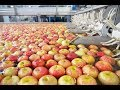 How to Processing Fruit in Factory ? Automatic Modern Fruit Processing Grading & Packing Macine