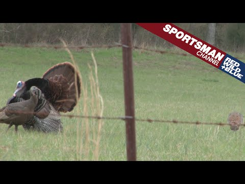 Turkey Hunting Hung Up Toms – Spring Chronicles