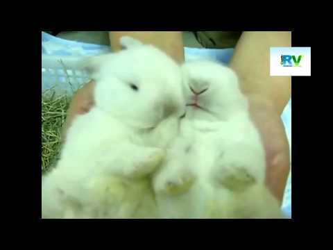 RabbitViet ban Rabi.flv