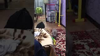 Прикол моя кошка пугается
