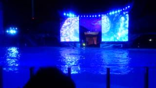 Shmoo whale show at Night , SeaWorld , Florida