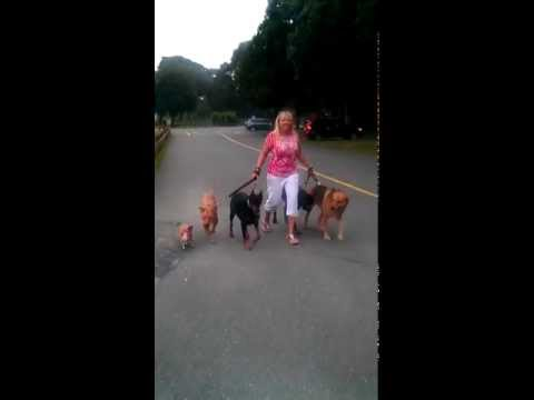 Loving Touch Pet Sitters - Professional Dog Walker in Toms River NJ
