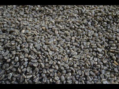 GCP - GREEN COFFEE PAPANDAYAN