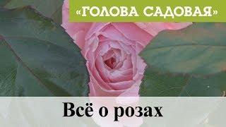 Голова садовая - Всё о прекрасных розах