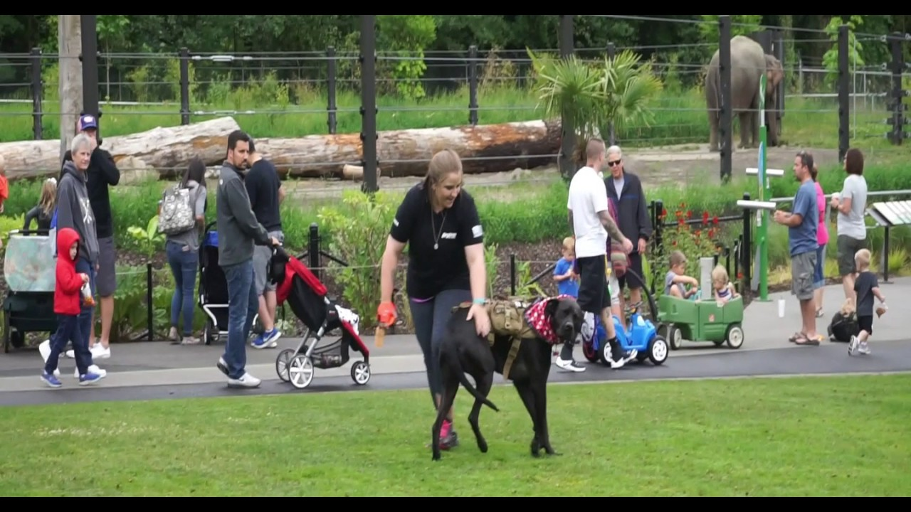 Ahri 4 Year Old Great Danerottweiler Mix At The Zoo Youtube