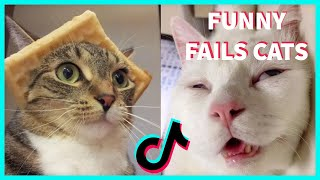 FUNNY FAILS CATS TIKTOK COMPILATION