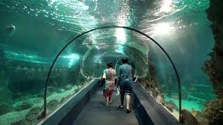 Адлер-Сочи. Океанариум