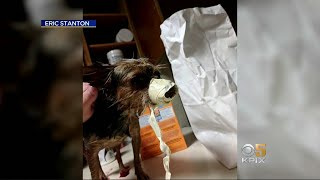 Owner Facing Allegations Of Animal Abuse At Two Bay Area Pet Grooming Businesses